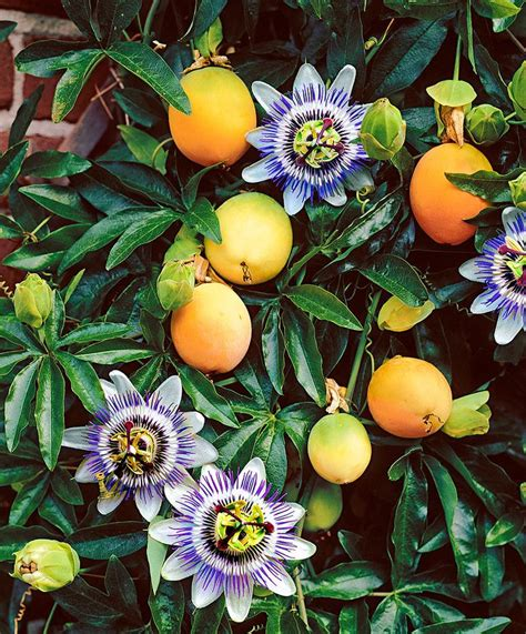 name a fruit that grows on trees best 25 flower ideas on