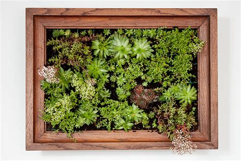 Vertical Garden Frame The Crafty Gentleman Page 2 Of 36 Diy And Craft