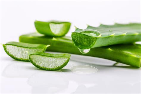 My Secret Hair Spa Aloe Vera Lidah Buaya Masker Rambut New New 1 14 awesome health benefits uses for aloe vera nutrition secrets