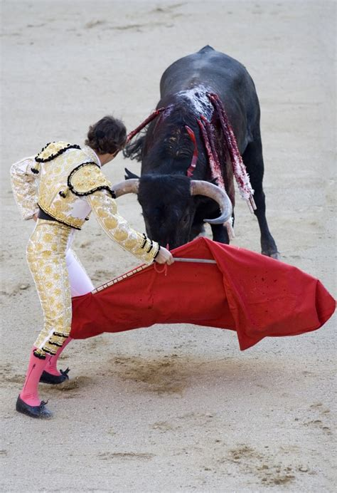 why do bulls the color do bulls the color wonderopolis