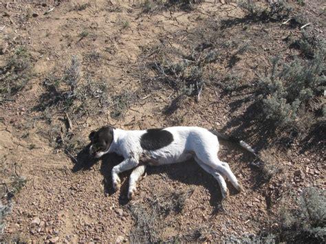 puppy utah 1 000 reward offered in of dumped animals st george news