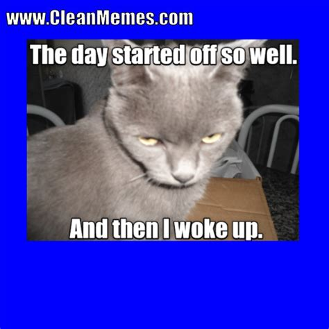 Clean Cat Memes - clean memes 09 25 2017 clean memes the best the most