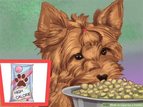 yorkie food portions how to care for a yorkie with pictures wikihow