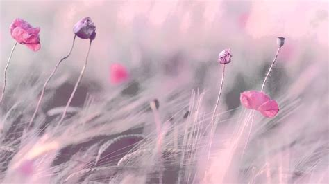 hours  relaxing  romantic piano background