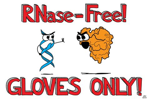 Or Free Elemental Humor Rnase Free