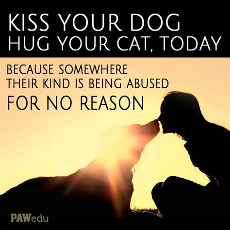 digital kindness is thoughtful hug 1000 images about inspiring animal quotes on