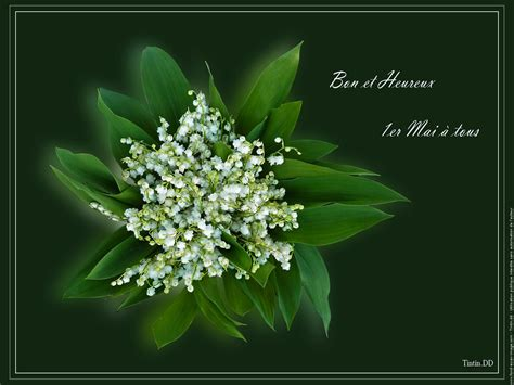 Muguet Fleurs Images by 1000 Images About Le Muguet Of The Valley On