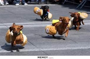dog memes funny dog pictures memey com