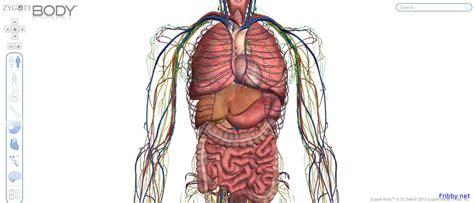 corpo umano immagini organi interni corpo umano