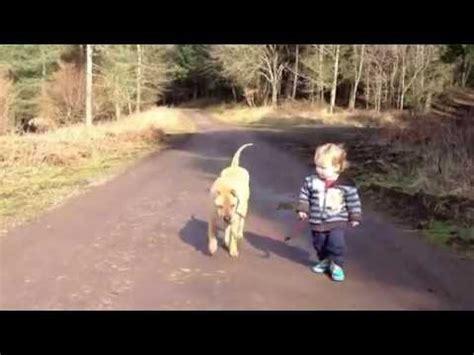 funny cute baby takes dog   walk kind fuehrt
