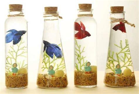 Botol Oksigen Kecil Jenis Ikan Hias Yang Dapat Dipelihara Dalam Kecil