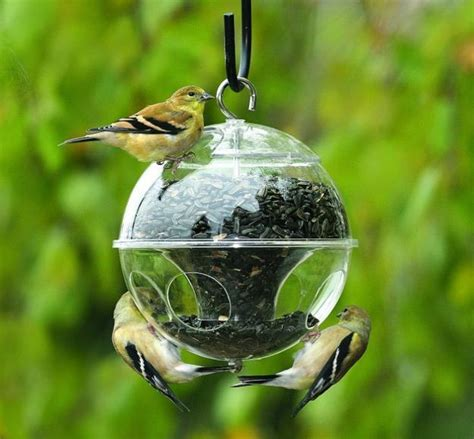 attracting backyard birds modern bird feeders attract birds and add beautiful yard