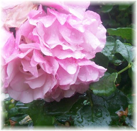 raindrops on roses shabby boutique