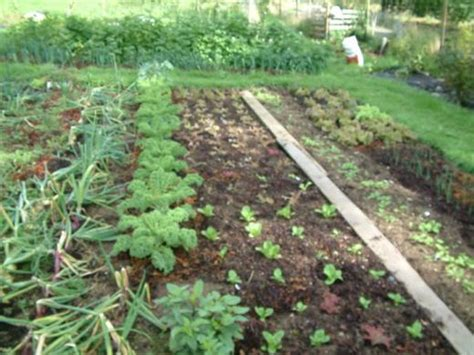 5 steps on how to start a small home garden