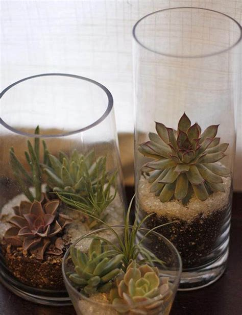 Glass Planters by 15 Best Indoor Succulent Planting Ideas That Can Beautify