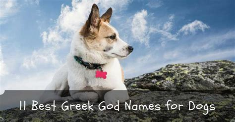 god names for dogs top 11 best cool god names for dogs and