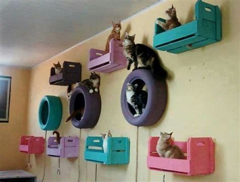Cat Room Ideas by Cat Room Ideas Every Quot Cat Quot Wants To Get