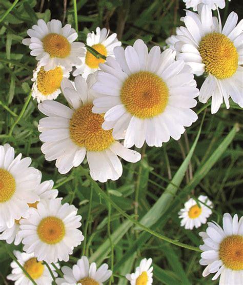 fiori conero margherita agriturismo fiori conero