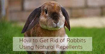 how to get rid of rabbits and ultrasonic rabbit
