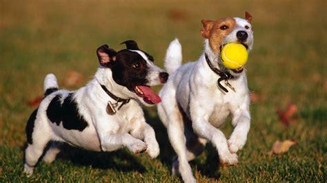 imagenes de niños jugando con animales fondos de pantalla de perros jugando tama 241 o 800x600