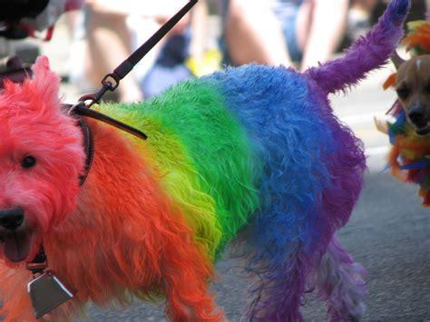 rainbow puppy rainbow dogs www imgkid the image kid has it