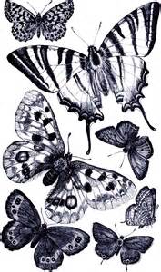butterfly prints free free vintage digital sts free vintage digital