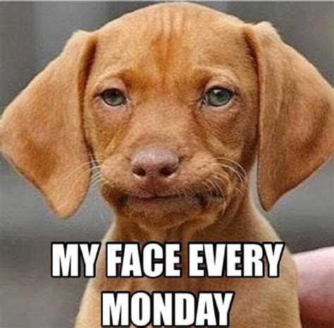 Monday Meme Images - 10 funny monday morning faces