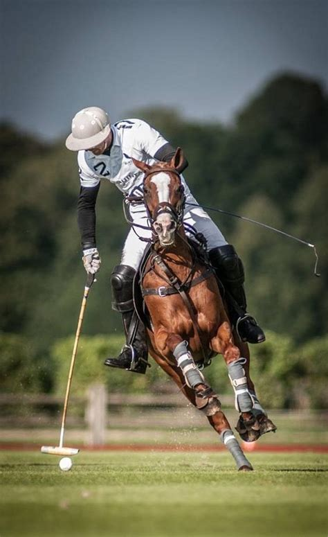 More Ponies For Polo by 8 Best Polo Ponies Images On Horses Southern