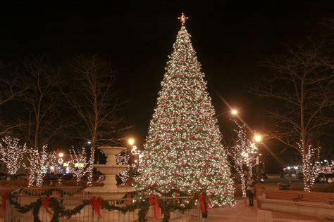 100 illinois christmas tree association christmas and holiday season wikipedia where to