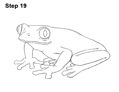 Drawing A Tree Frog Step By Step by How To Draw A Frog Eyed Tree Frog