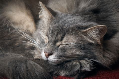 Sleep Cats what makes cats so catster