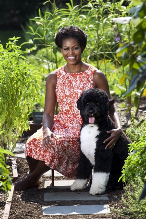 first dog white house first lady michelle obama and bo the dog in the white house kitchen garden michelle