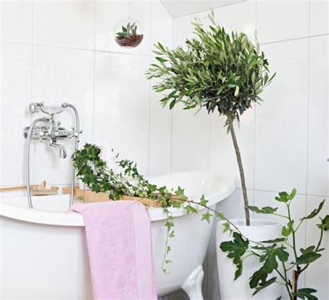 piante per bagno piante bagno fiori idee per il design della casa