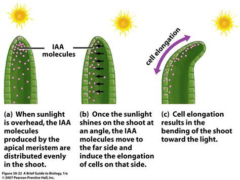 Hormon Auxin biology plant hormones