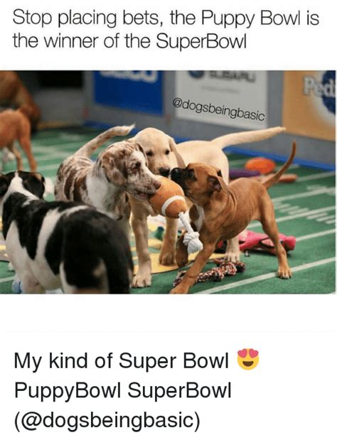 puppy bowl winner 25 best memes about puppy bowl puppy bowl memes