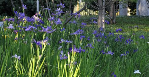 iris city gardens