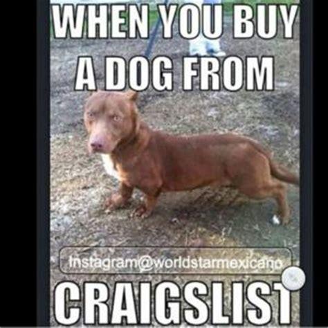 buying a puppy on craigslist craigslist joke kappit
