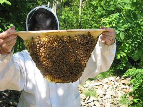 top bar bees top bar beehives the best beekeeping method for healthy