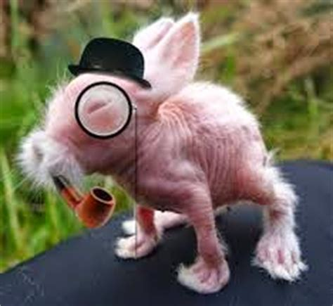 Funny hairless bunny interesting facts amp latest pictures funny and cute animals