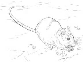 kangaroo rat coloring page brown rat coloring page free printable coloring pages