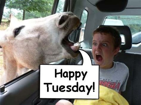 Funny Tuesday Meme - happy tuesday funny sayings horse happy tuesday