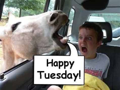 Happy Tuesday Meme - happy tuesday funny sayings horse happy tuesday