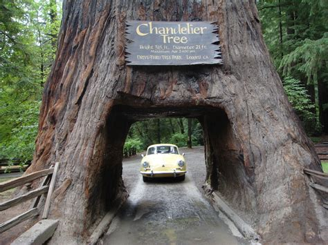 chandelier tree in the drive thru tree park mfs now u there s a drive thru for almost everything