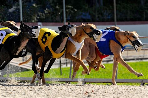 puppy race racing could be coming to an end in this state 3milliondogs