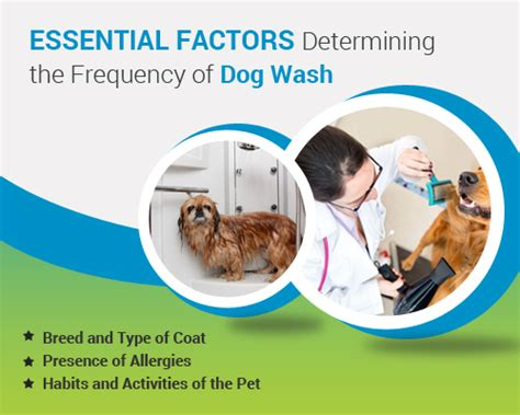 can you bathe a 6 week puppy essential factors determining the frequency of wash