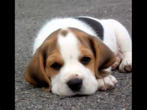 most adorable puppies top ten most cutest puppies in the world 2011