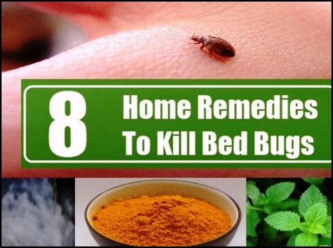 home remedy to get rid of bed bugs home remedies to get rid of bed bugs permanently 2018