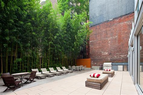 backyard bamboo garden bamboo on pinterest bamboo hedges and privacy screens