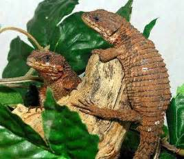 reptile care keeping reptiles and amphibian pets