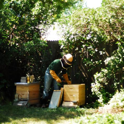 Bees In Backyard by The Best Hive For The Backyard Beekeeper Backyard Ecosystem